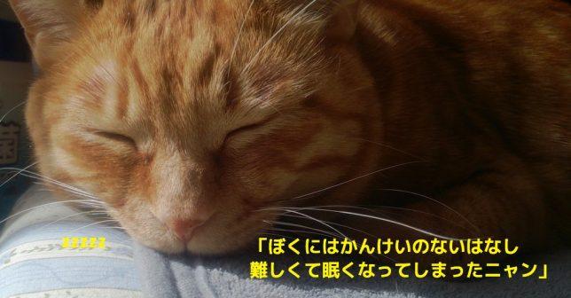 【トレードの心理学】認知バイアス