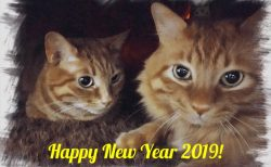 Happy New Year 2019 !!!